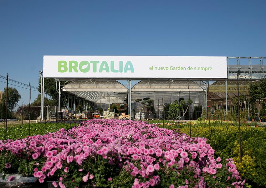 Brotalia Valentia