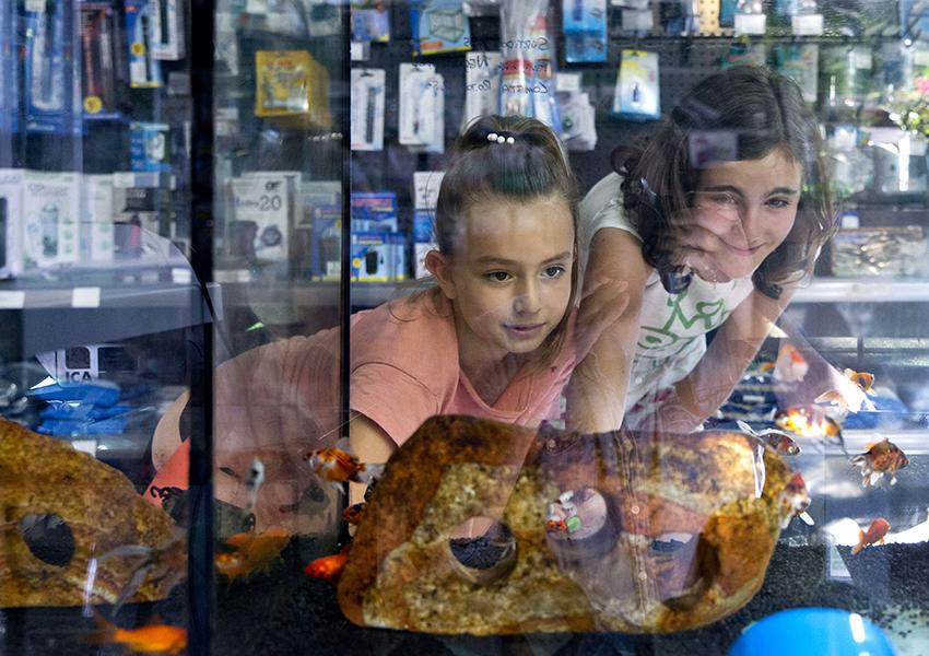 Brotalia Valentia peces