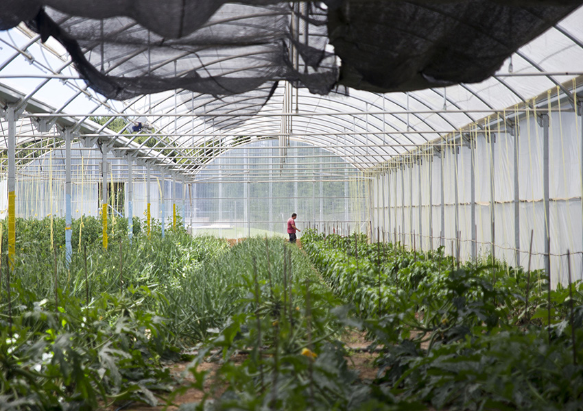 Huerta Ecológica Valentia invernadero