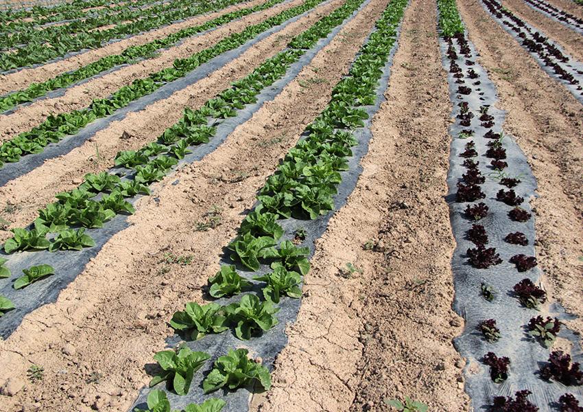 Huerta Ecológica Valentia