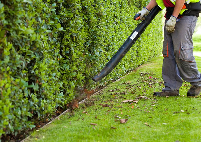 Valentia Servicios de Jardinería